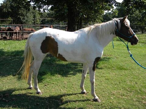 Blaze's Tribute Equine Rescue - Hi-Hopes