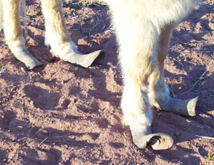 Tonka's hooves
