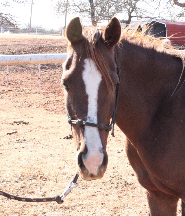 Blaze's Tribute Equine Rescue - Rescued Horses